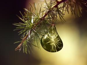 vánoce nový rok tai chi čchi kung tajči qi gong